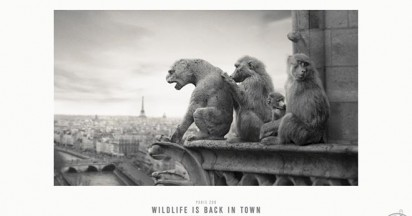 Paris Zoo Wildlife Back in Town
