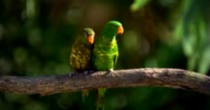 Parrots make V8 Racing Green in Australia