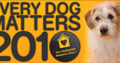 Pedigree Adoption Drive Charlie's Story