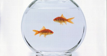 Pilot Goldfish Called Gloria and Gary