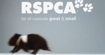 RSPCA All Creatures Great and Small