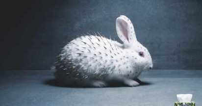 Sorbent Rabbit Fur