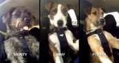SPCA Driving Dogs