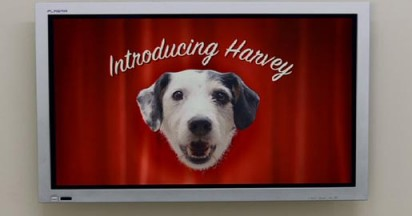Thinkbox Harvey in Dogs Home