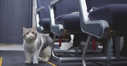Thomas Cook Cats on a Plane