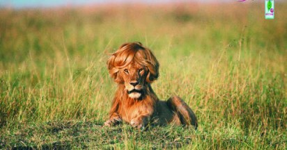 Timotei Styling Mousse For Lion