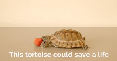 Alan Rickman and the Tortoise