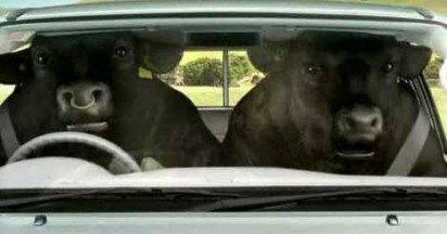 Toyota Hilux Bulls Hit Escape Plan