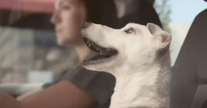 Volkswagen Dog Sings with Polo Confidence