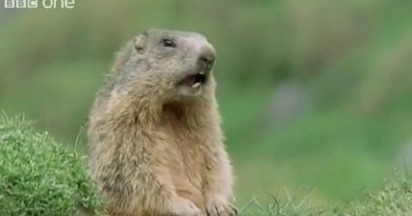 BBC Walk on the Wild Side with Funny Talking Animals
