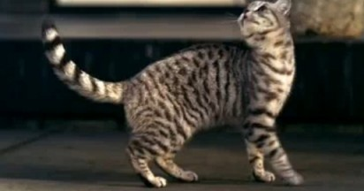 Whiskas Jumpy Cat