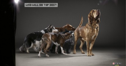 Who Will Be Top Dog?