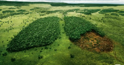 WWF Lungs Before Its Too Late